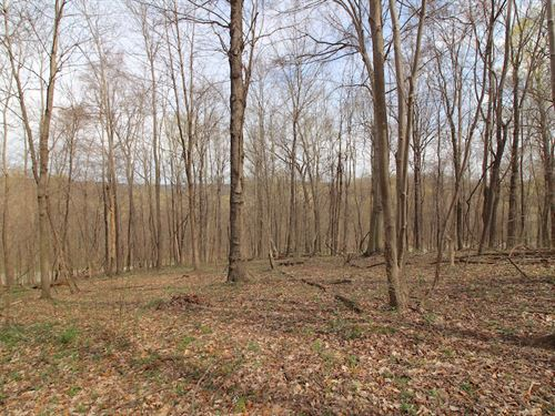 Tr 56 - 7 Acres : Mount Perry : Perry County : Ohio