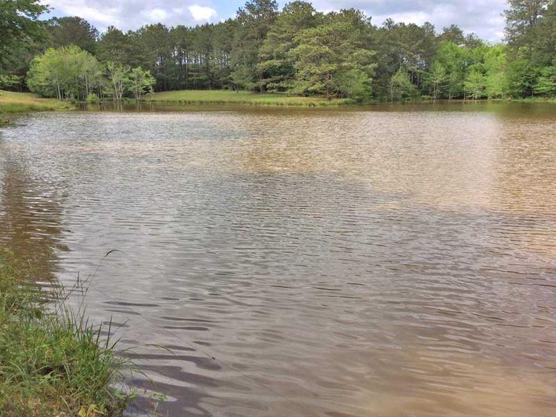 McLeod Road Tract : Goshen : Crenshaw County : Alabama