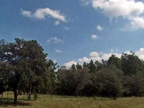 Levy County, Fl $28,000 Neg : Dunnellon : Levy County : Florida