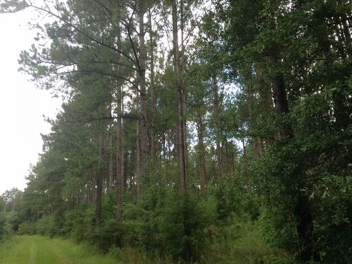 145 Acres Of Timber Land : Tylertown : Walthall County : Mississippi