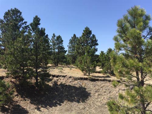 Starved Rock 5 : Peyton : El Paso County : Colorado