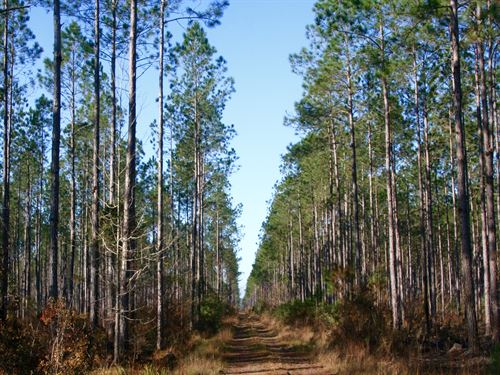 Apalach Timber Farm : Bristol : Liberty County : Florida