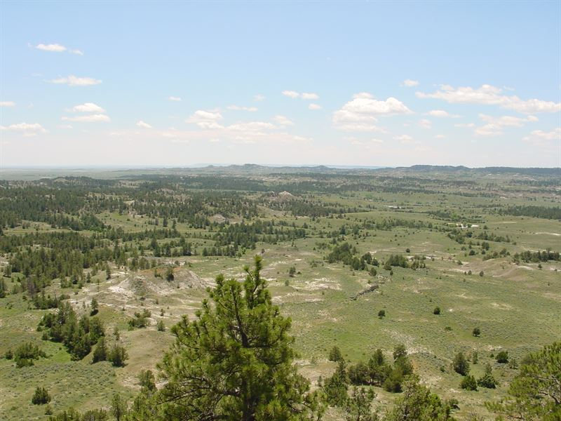 Lonetree Land And Livestock : Upton : Weston County : Wyoming
