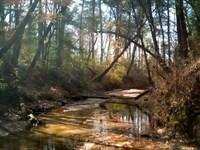 881.7 Acres Cr 3400 : Colmesneil : Tyler County : Texas