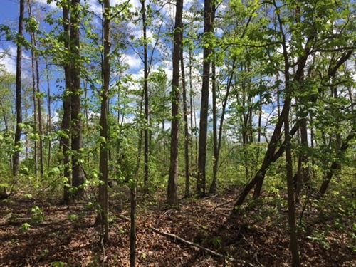 5.00+/-Acres Unrestricted W Creek : McMinnville : Warren County : Tennessee