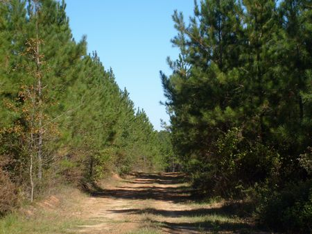 Parcel A Terrell 25100 Tract : Dawson : Terrell County : Georgia