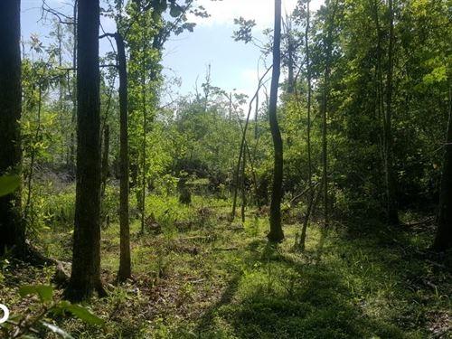 Moores Creek Homestead : Maple Hill : Pender County : North Carolina