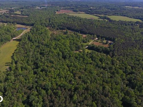 Timber, Pasture, And Hunting Opport : Northport : Tuscaloosa County : Alabama
