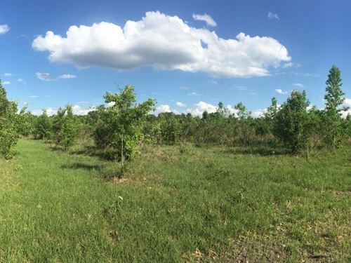 15 Acres In Oktibbeha County In Sta : Starkville : Oktibbeha County : Mississippi