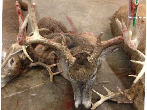 Excellent Deer Hunting Land : Cassville : Grant County : Wisconsin