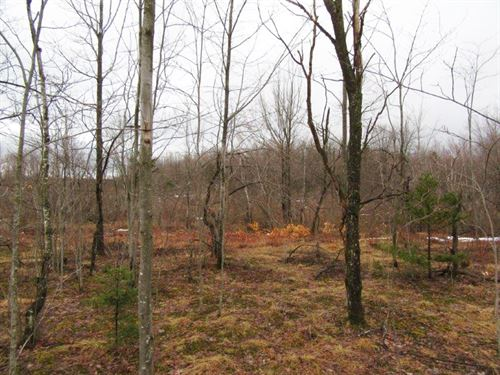 25 Acres Malone Ny Hunting Land : Burke : Franklin County : New York