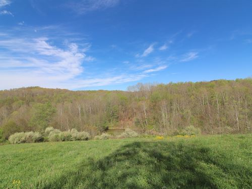 Salem Hollow Rd - 80 Acres : New Straitsville : Hocking County : Ohio