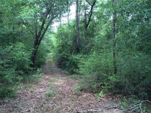 81.3 Acres +/ For Sale Harrison Cou : Saucier : Harrison County : Mississippi