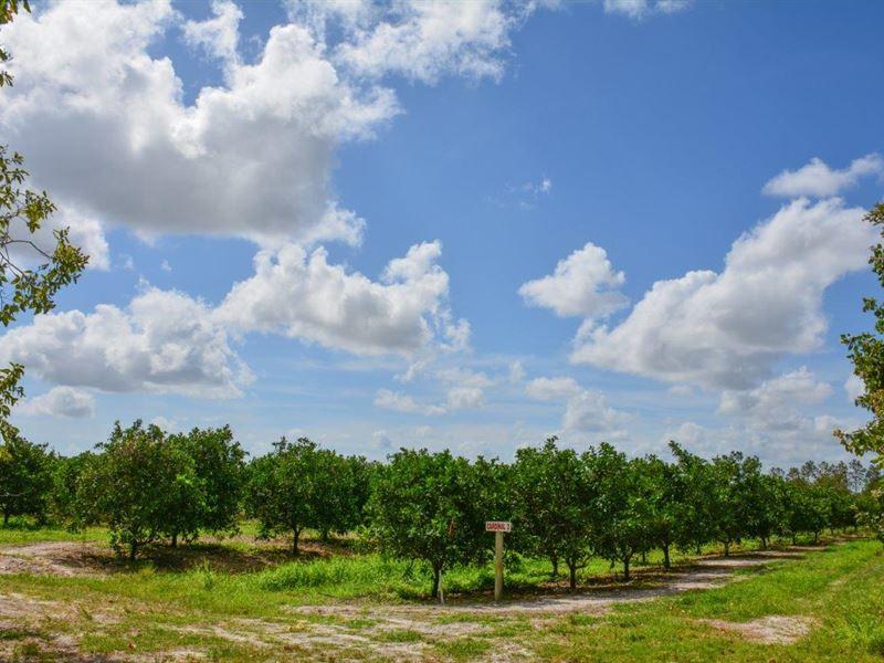 Cardinal Grove : Vero Beach : Indian River County : Florida