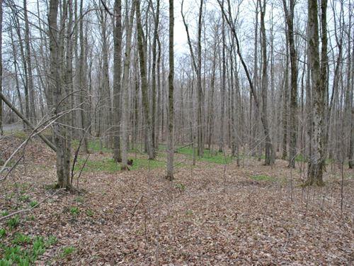 20 Acres Whitney Point Ny Hunting : Triangle : Broome County : New York