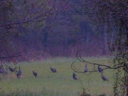 Terrell Plantation : Sasser : Terrell County : Georgia