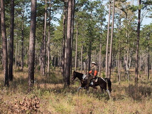 Morton Bray Plantation : Quitman : Brooks County : Georgia