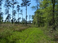Affordable Hunting With Small House : Warrenton : Warren County : Georgia