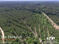 117 Acres In Grant Parish : Pollock : Grant Parish : Louisiana