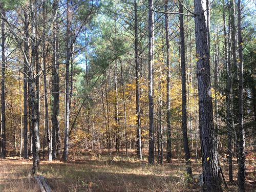 70 Wooded Acres Furnished Cabin : Thomastown : Attala County : Mississippi