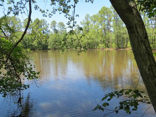 Small Tract- Perfect Homesite : Eastman : Dodge County : Georgia
