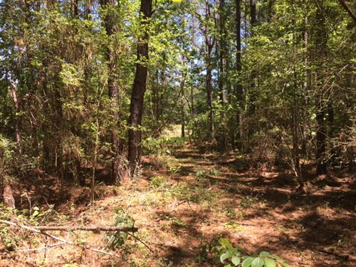 84+/- Acres : Beaumont : Perry County : Mississippi