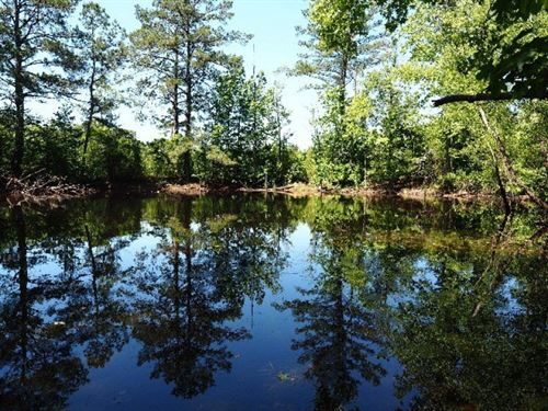 Hunting Land 40 Acres Pond In South : Magnolia : Pike County : Mississippi