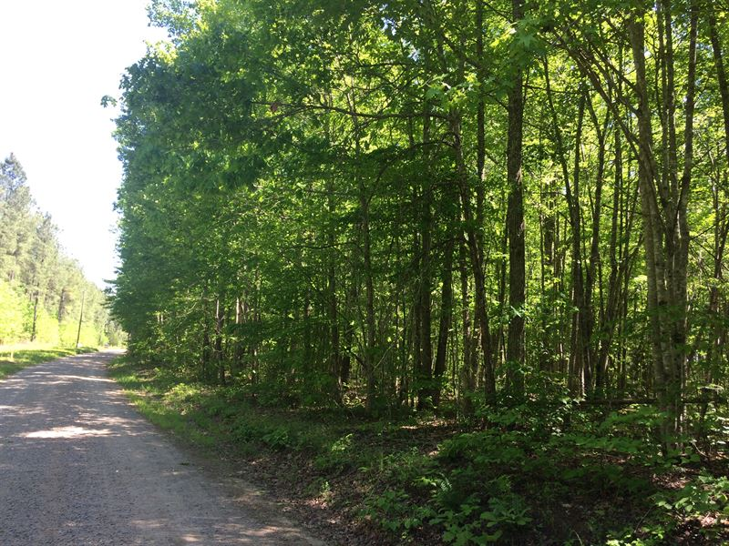 Private And Wooded : Lunenburg : Lunenburg County : Virginia
