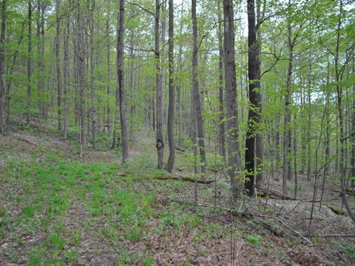 25 Acres Richford Ny Near Forests : Richford : Tioga County : New York