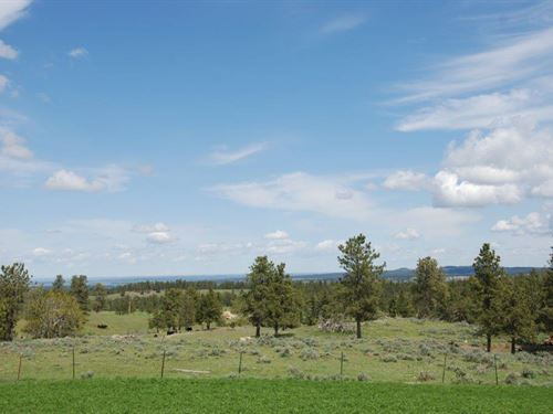 Timberline Stock Elk Ranch : Broadview : Yellowstone County : Montana