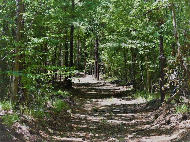 Timber Recreational Hunting Pasture : Fayette : Jefferson County : Mississippi