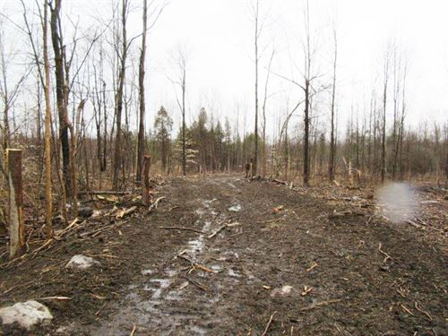 117 Acres Constable Ny Hunting Land : Constable : Franklin County : New York