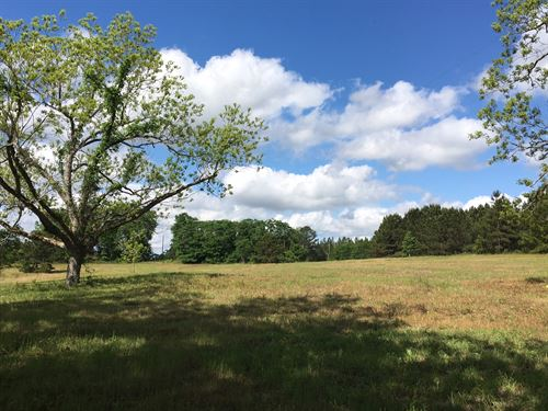 14 Acres Of Open Pasture Land : Banks : Pike County : Alabama