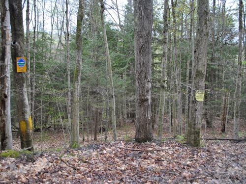 154 Acres Borders State Forest Ny : Candor : Tioga County : New York