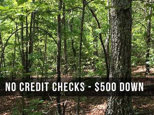 7 Acres By National Forest : Birch Tree : Shannon County : Missouri