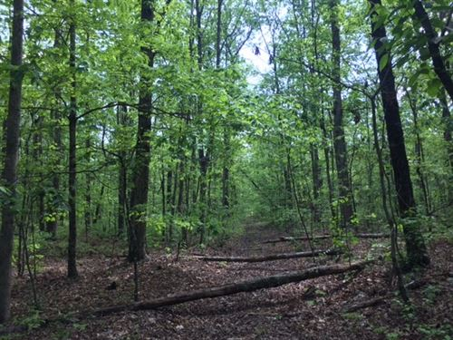 90+/-Acres Beautiful Mature Woods : Monteagle : Marion County : Tennessee