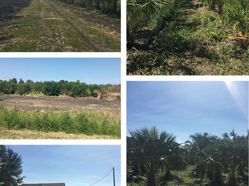 Black Hammock Tree Farm - Parcel A : Oviedo : Seminole County : Florida