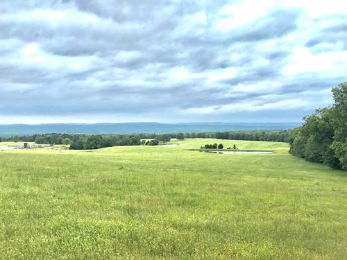 Beautiful Cattle Farm Near Clinton : Choctaw : Van Buren County : Arkansas