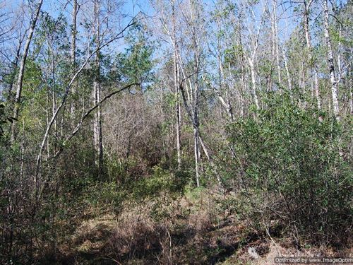 10+/- Acres : Poplarville : Pearl River County : Mississippi