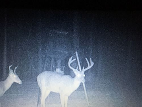 Big Buck Country : Crystal Springs : Copiah County : Mississippi