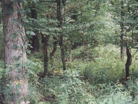 Reduced Sale Price : Mineral Wells : Wood County : West Virginia