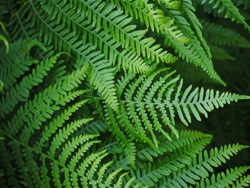 Premium Fern And Foliage Operation : Pierson : Volusia County : Florida