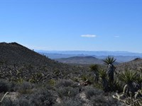 Mtn View Land Liquidation 6/3 : Dolan Springs : Mohave County : Arizona
