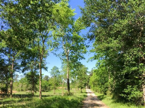 20.45 Acres Fm 2989 : Midway : Walker County : Texas