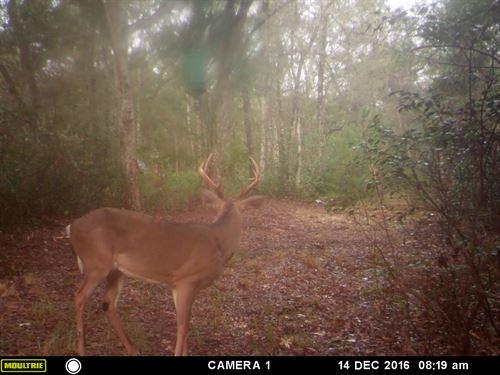 Plantation In-Holding : Lamont : Madison County : Florida