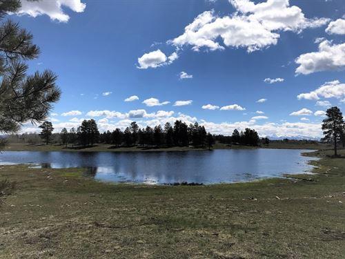 Salter Y Ranch : Cahone : Dolores County : Colorado