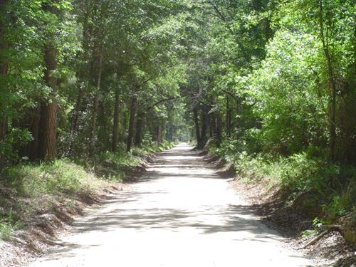 Carter South Tract : Allendale : South Carolina