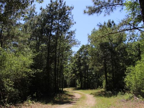 Forest Trails : Montgomery : Texas