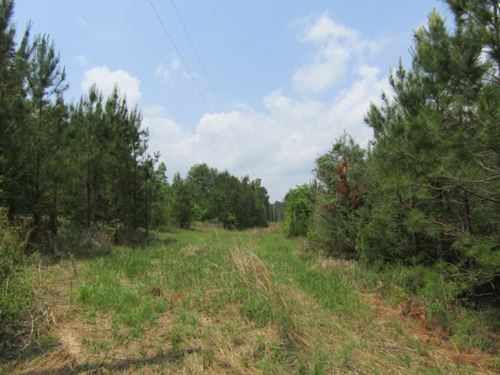 20 Acres In Jefferson Davis County : Prentiss : Jefferson Davis County : Mississippi
