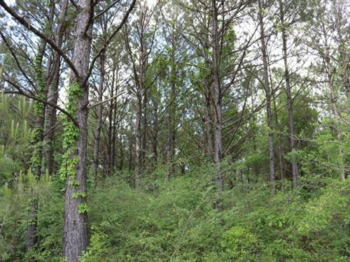 5 Acres In Lamar County : Sumrall : Lamar County : Mississippi
